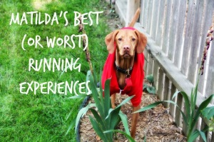 Tilda Tuesday: Matilda the Vizsla's Best (or Worst) Running Experiences