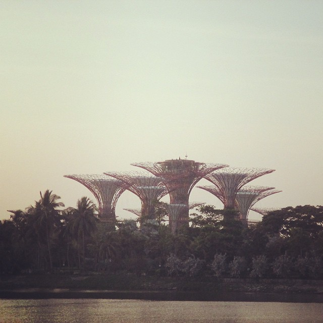 These super trees look like something from the Hunger Games. #singapore  #GardensbytheBay #supertrees