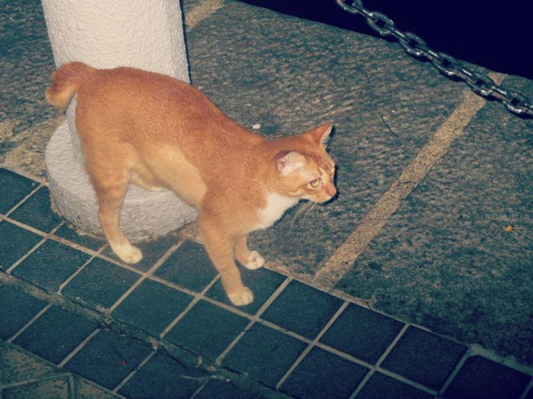 taillesscat