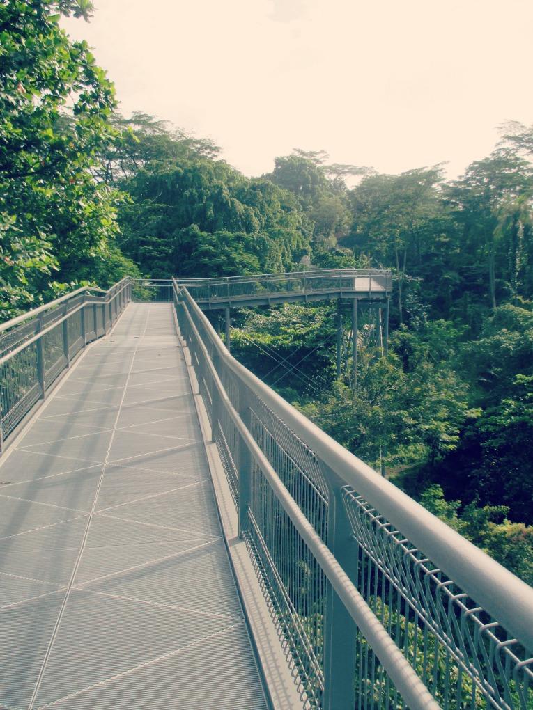forestwalk1