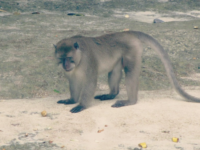monkeybeach5