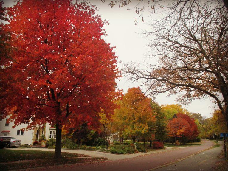 fall colors minneapolis