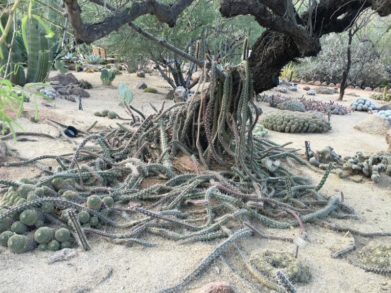 botanical garden desert 1