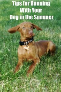 Friday Five: Favorite Tips for Running With Your Dog in the Heat.