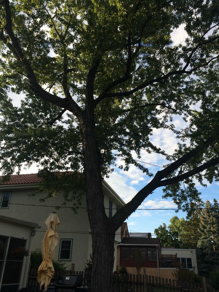 pre tree