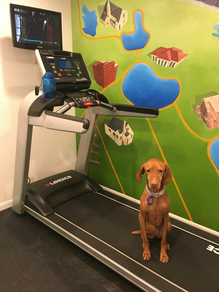 tilda-on-treadmill