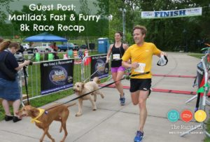 Guest Post by Matilda: Fast and Furry 8k 2018